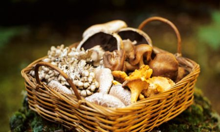 Foraging for Mushrooms - How to Identify, Find and Prepare Wild Mushrooms