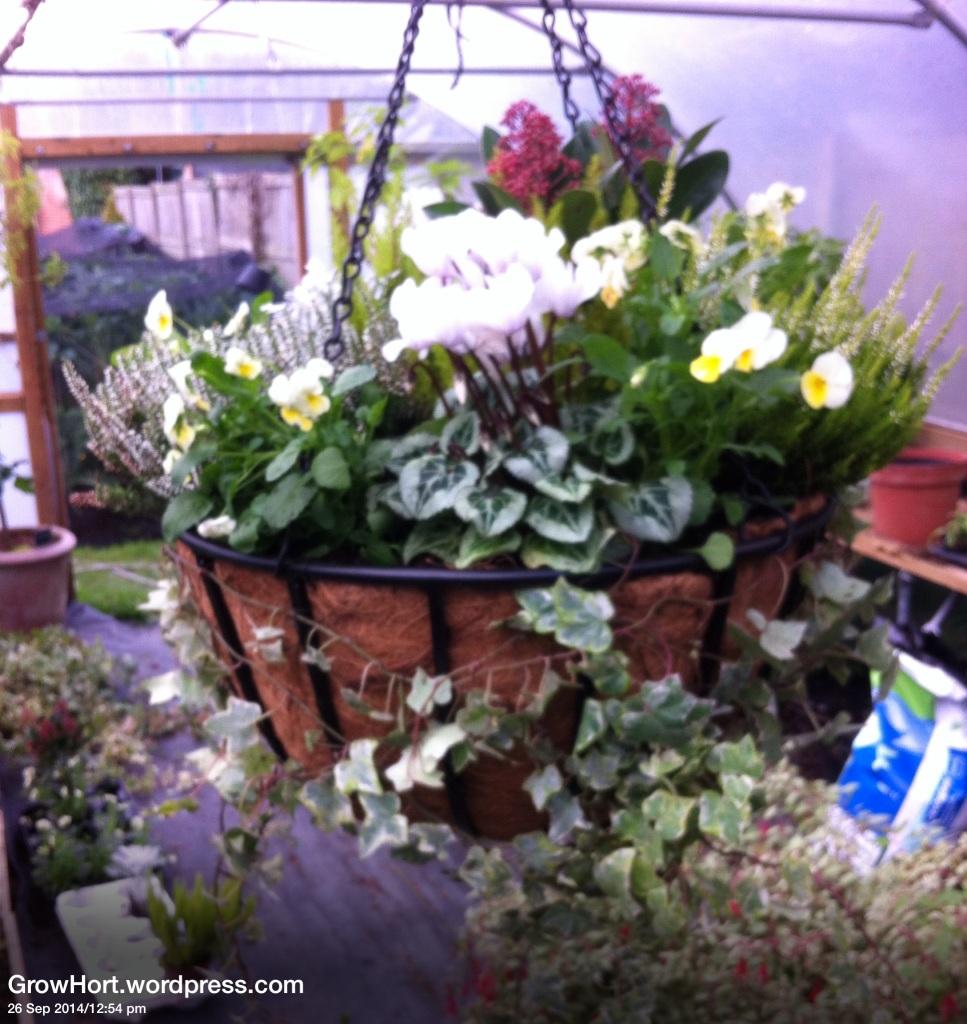 Planted Designer Winter Hanging basket