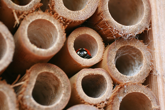 ladybird in a bug box
