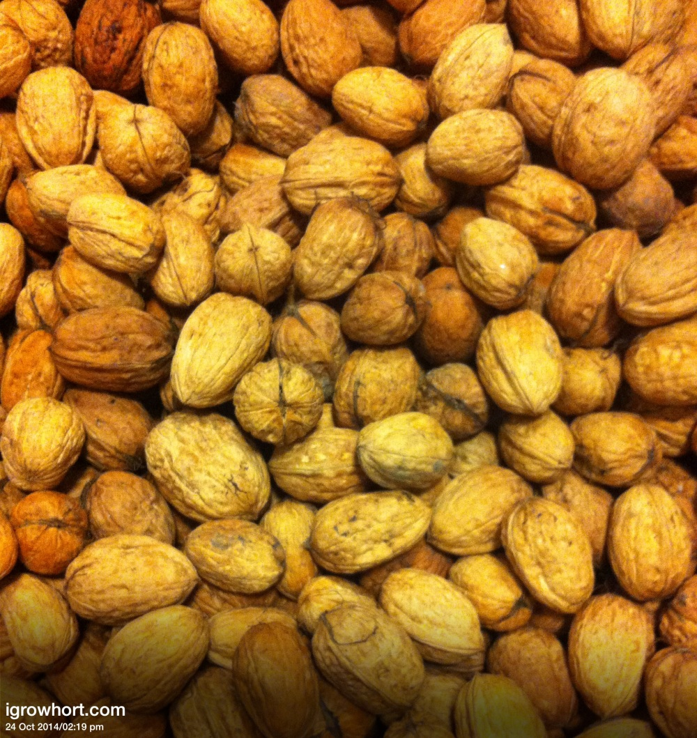 It is a good idea to air dry Walnuts before bringing them indoors to complete the process.