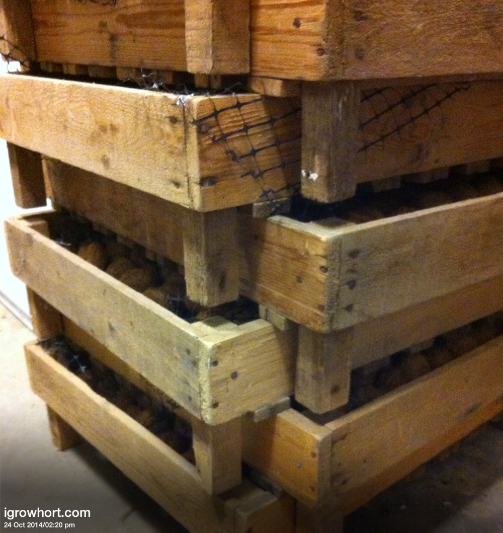 Stacking boxes with slats and plenty of airflow are just one idea for drying walnuts.