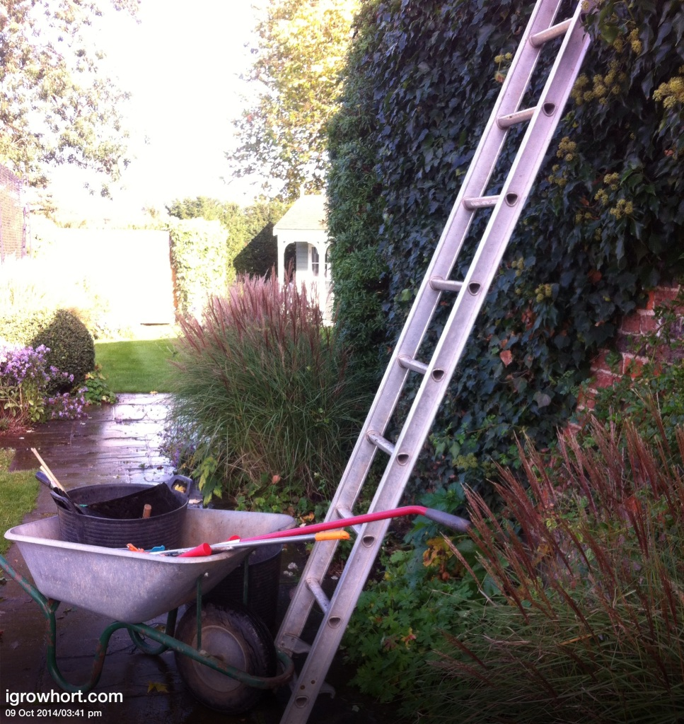 Pruning and trying of wall climbers and shrubs is an essential job in November. Securing branches to training wires will prevent wind damage to delicate stems.