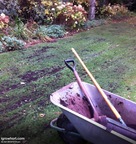 Aerate the lawn before the ground gets to wet, a generous dressing of leaf mould or lawn top dressing will improve the condition of your grass.