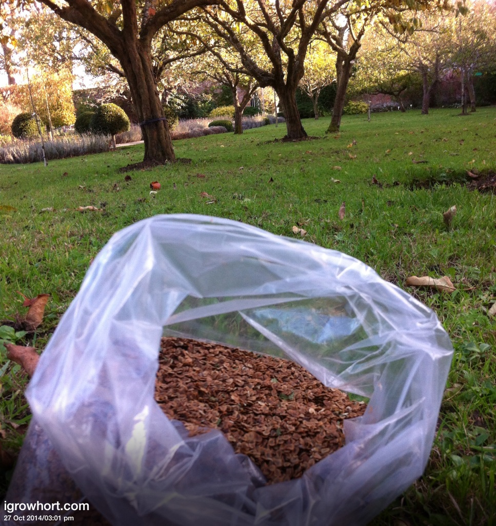 If you have an area devoted to wild flowers November is a good time to scarify the grass and sow wild flowers for next year.