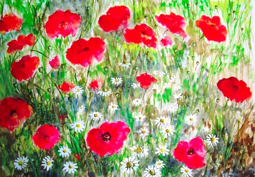 Poppy wild flowers