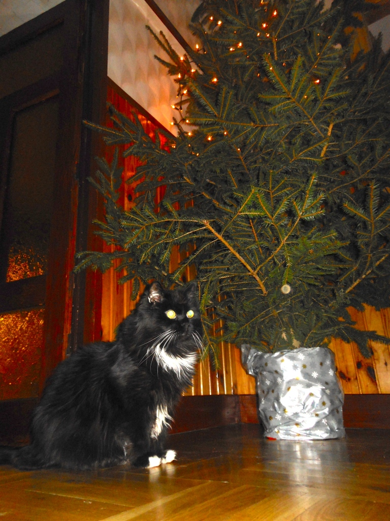 Mr Beaks supervising as we make our real tree pet proof.