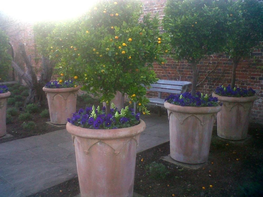 Spring designer Pots
