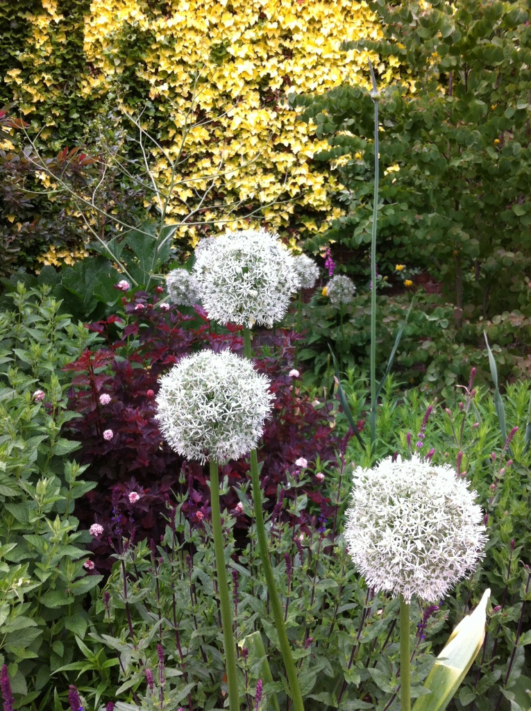 A is for Allium