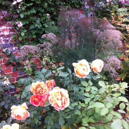 Love colour in your garden