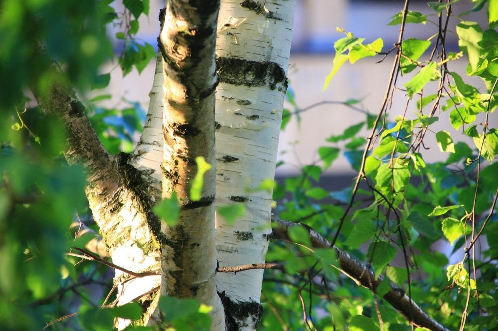 birch-spring-clean