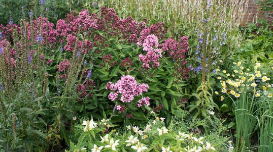 Perennials and shrubs growing in harmony.