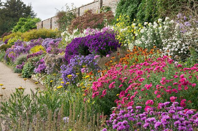 volunteer waterpenny gardens