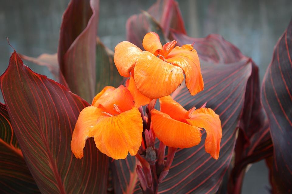 flower-1160605_960_720
