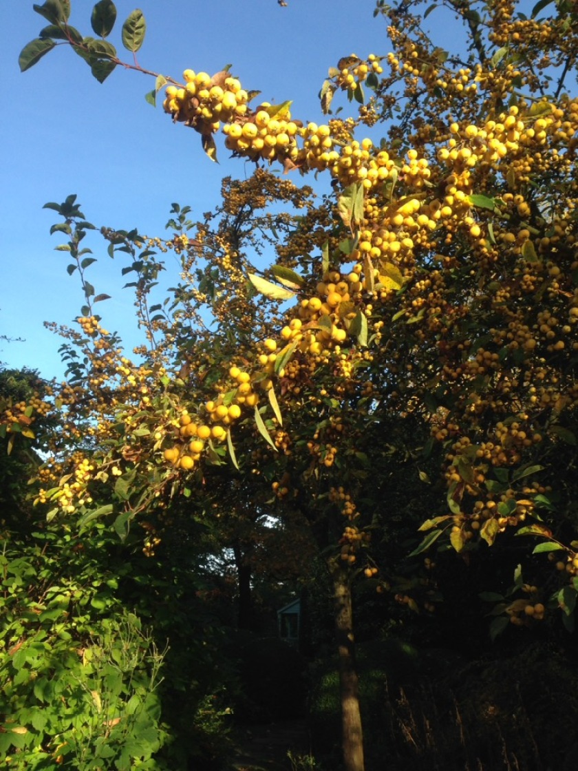 Firey shades of Autumn turn to golden embers.