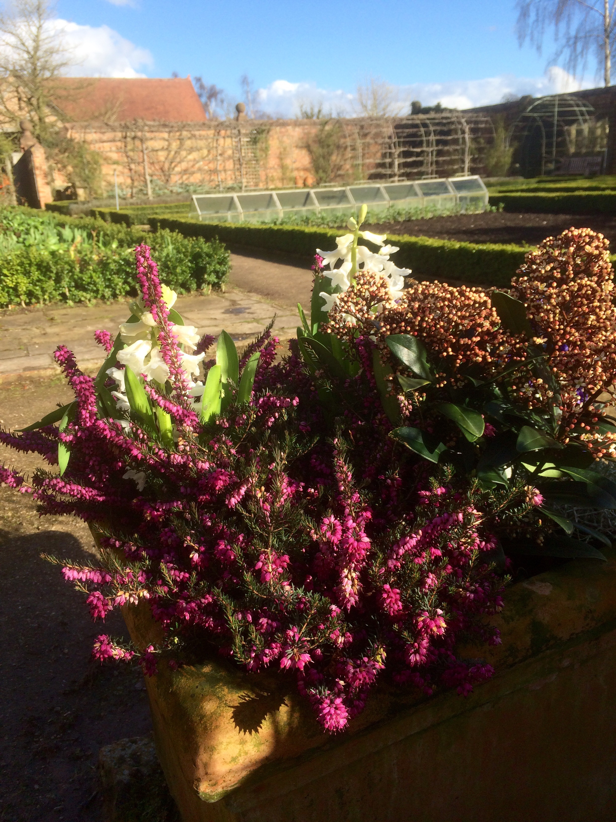 Plan for 12 Months with Flowering Heathers