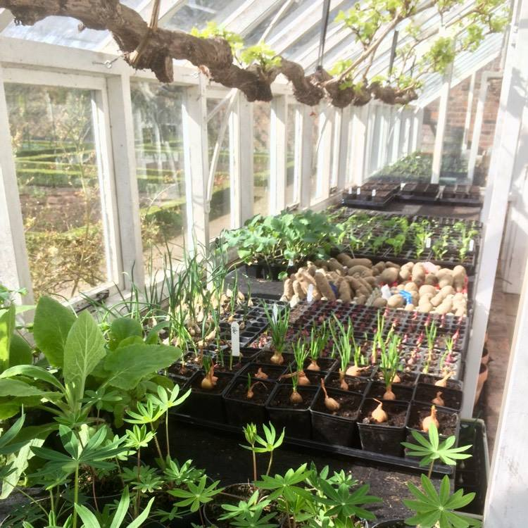 march into april gardening tips