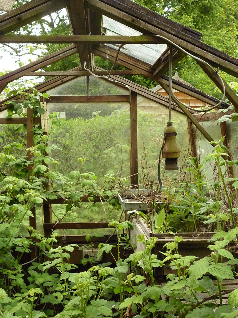 Overgrown_Greenhouse